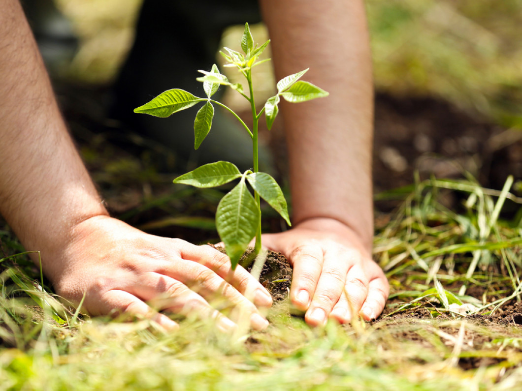 Keep Mobile, Alabama Beautiful by Planting Trees